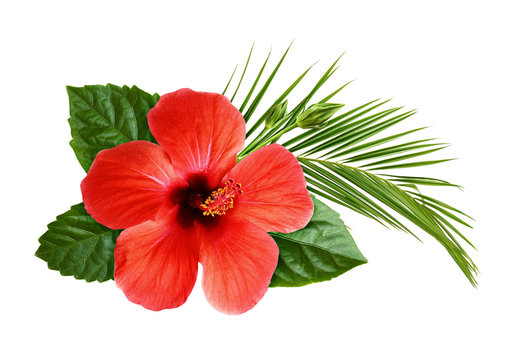 Hibiscus flower with palm leaf in floral tropical composition
