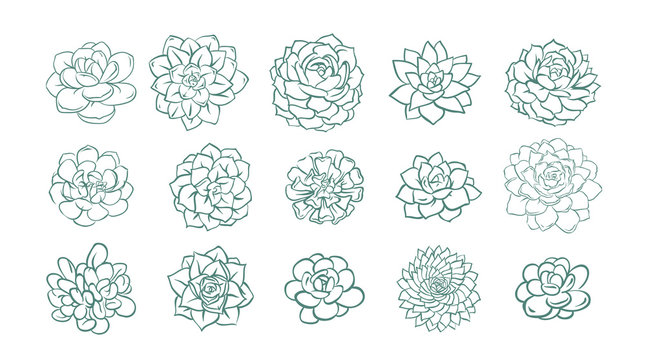 Set of hand drawn line succulent plant isolated on white background. Vector illustration