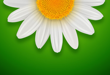 Green sunny background with white spring daisy flower