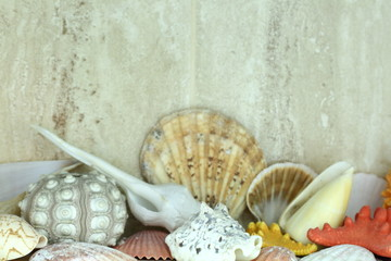 Shells of crustaceans in various colors and shapes as a bathroom or toilet decoration.