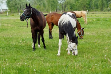 Beautiful horses on a farm. Horses in the summer in the meadow