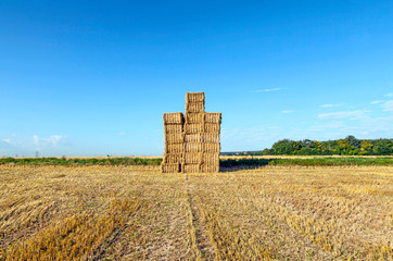 Hay bales in a field after the fresh harvest under blue sky