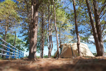 nature landscape camping tent with tree on green grass meadow and mountain in jungle garden or forest with blue sky for family vacation picnic on holiday relax travel in autumn winter or summer