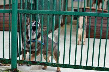 Fototapeta A dog locked in a cage of animal shelters.