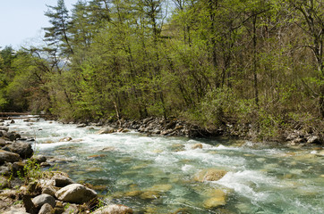 透明な川と芽吹き