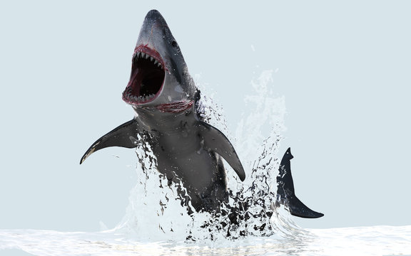 3d Illustration Great White Shark Jumps Out of The Water with Clipping Path