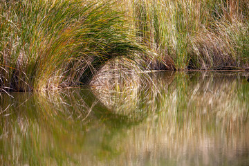 A Tunnel in the Reeds