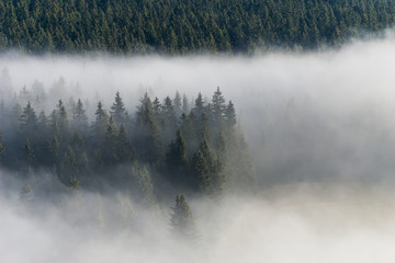 Early morning mist sweeping across a forest in the Sumava National Park