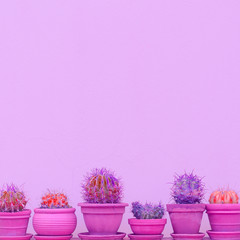 Set of cute cactus on pink wall. Home plants decor