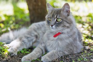 Gray street cat closeup at spring