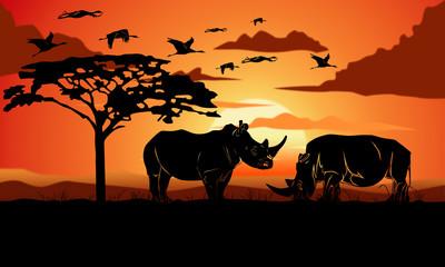 Rhinos - Rinoceronti