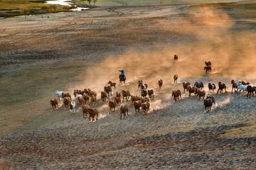 Bashang of Inner Mongolia horse farm horses