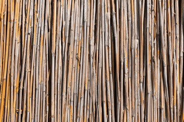 Reed wall, background, or texture in daylight.