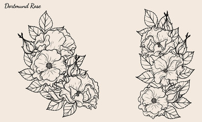 Rose vector set by hand drawing.Beautiful flower on brown background.Rose art highly detailed in line art style.Dortmund rose for wallpaper or tattoo.