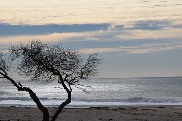 Dark tree in the morning with the waves crashing behind in Gisborne, New Zealand
