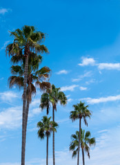 tall palm trees against a sunny blue sky and white clouds with copy space