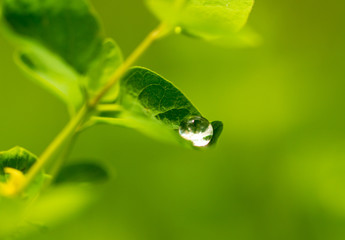 Water drops on a green leaf of a plant