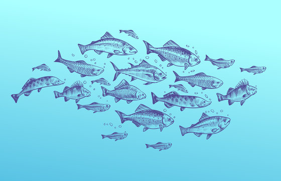 Fish school. Fishes group hand drawn sketch. Restaurant delicacy seafood menu dorado mackerel tuna fresh food design