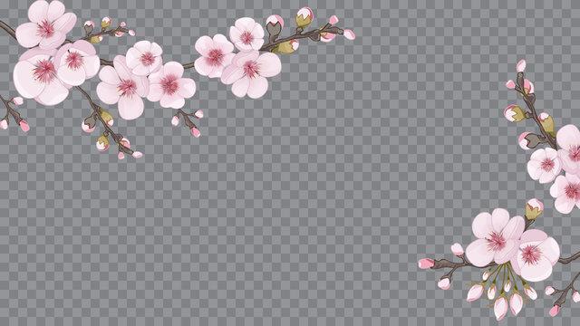 Festive frame horizontal of sakura flowers. Theme design fabric, invitations, packaging, cards. Magenta on transparent background. Handmade background in the Japanese style.