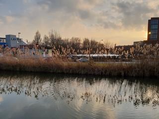 Long reed grass reflecting in the water of the ring canal Zuidplaspolder in Nieuwerkerk aan den IJssel in the Netherlands