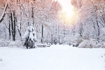 Beautiful winter park, trees covered with snow. Winter landscape Fototapete