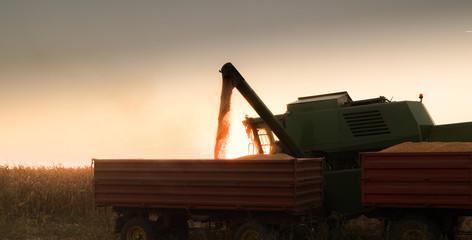 Wall Mural - Pouring corn grain into tractor trailer