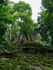 Vertical shot of temple reclaimed by the jungle at the Angkor Wat complex near Siem Reap in Cambodia
