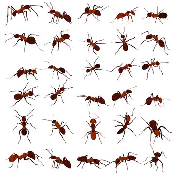 ant brown, insect, set, isolated, vector