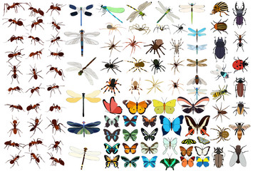 insect set, butterfly, ant, dragonfly, beetle vector