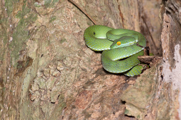 Green snake in rain forest,