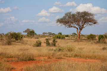 A big tree in the savannah between another plants