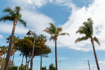 Palm trees on a background of beautiful  sky