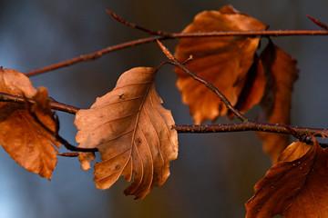 Makro von Blättern am Baum im Herbst und Winter