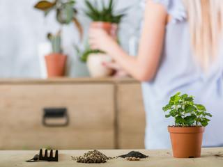 Home gardening concept. Plant transplantation. Flowerpot and garden tools.