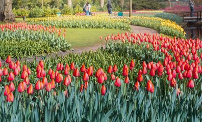 Keukenhof Gardens, flowers and tulips. Netherlands