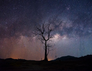 Milky Way Star Trail above a bare tree.