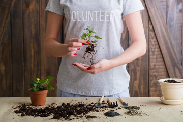 Think green motto. Nature care and protection concept. Volunteer engaged in plant repotting.