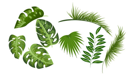 Tropical leaves collection drawing set  vector isolated elements on white background,elements,flyers, invitation,brochure,spring,summer,banners,posters,white background,bag and t-shirt print