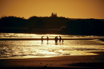 people playing silhouette at sunset on beach