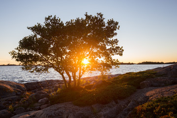 Beautiful sunset landscape. The sun shines through the branches of the tree.