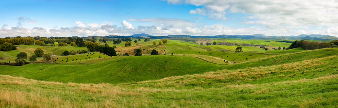 High resolution panoramic landscape with green hills in New Zealand, northern island
