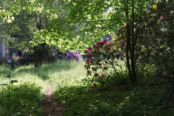 beautiful landscape in the rhododendron park