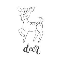 Baby deer vector illustration