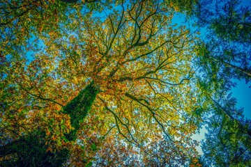 Leaves and trees in autumn