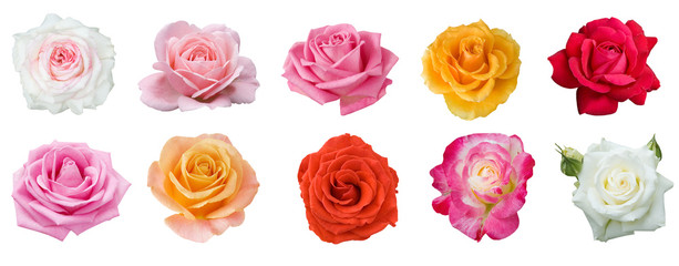 red,yellow,cream,white,pink rose set isolated on white background