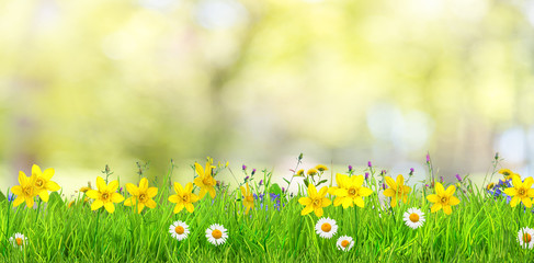 Wall Mural - a spring flowers and green grass background