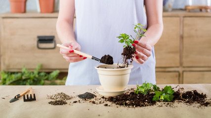 Vegetative plant reproduction. Nature protection concept. Woman engaged in propagation producing new plant.