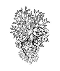 Illustration Anatomical heart with flower
