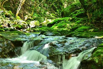 原生林の川