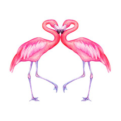 Couple tropical pink flamingo bird (flame-colored) in love. Hand drawn watercolor painting illustration isolated on white background.